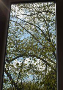 roetsch-endlich-wieder-blauer-Himmel---Linde-vor-Fenster