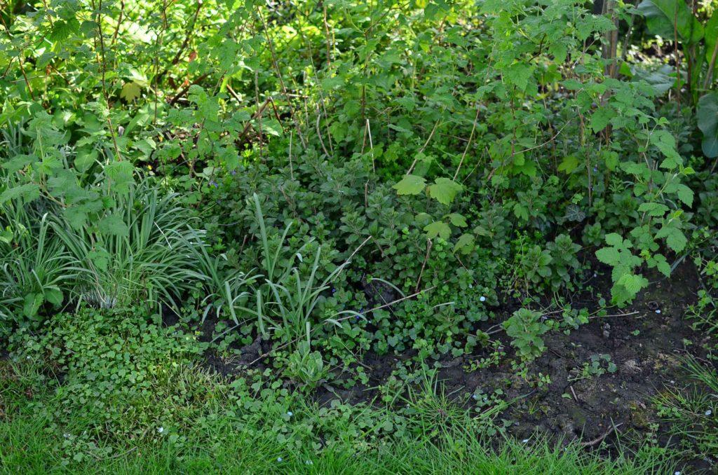 roetsch-zugewucherter-Garten