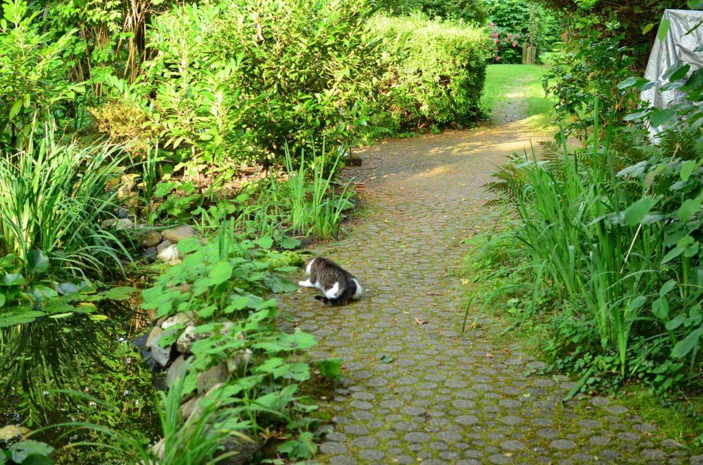 roetsch-Katze-auf-Jagd-im-Garten