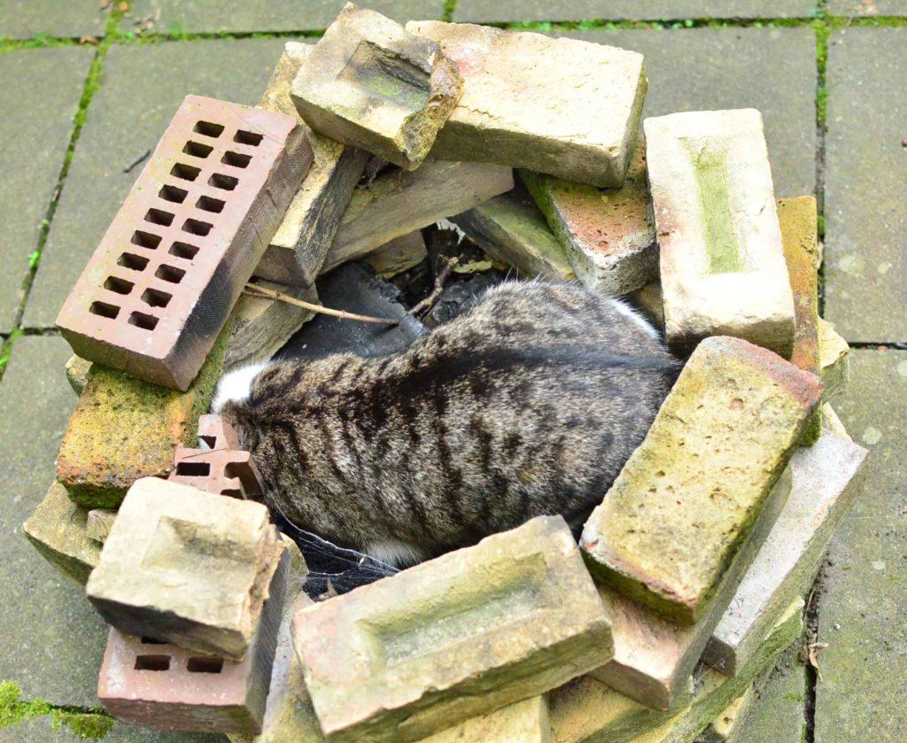 roetsch-Katze-in-Feuerstelle