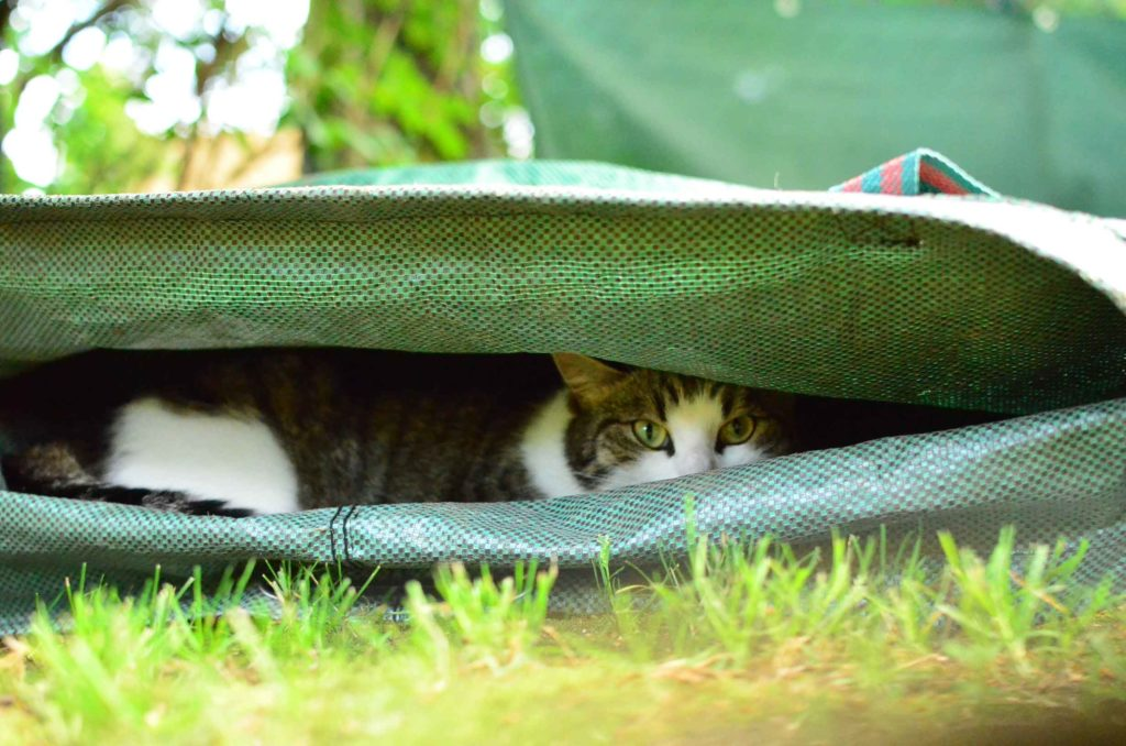 roetsch-Katze-in-Gruenabfall-Sack