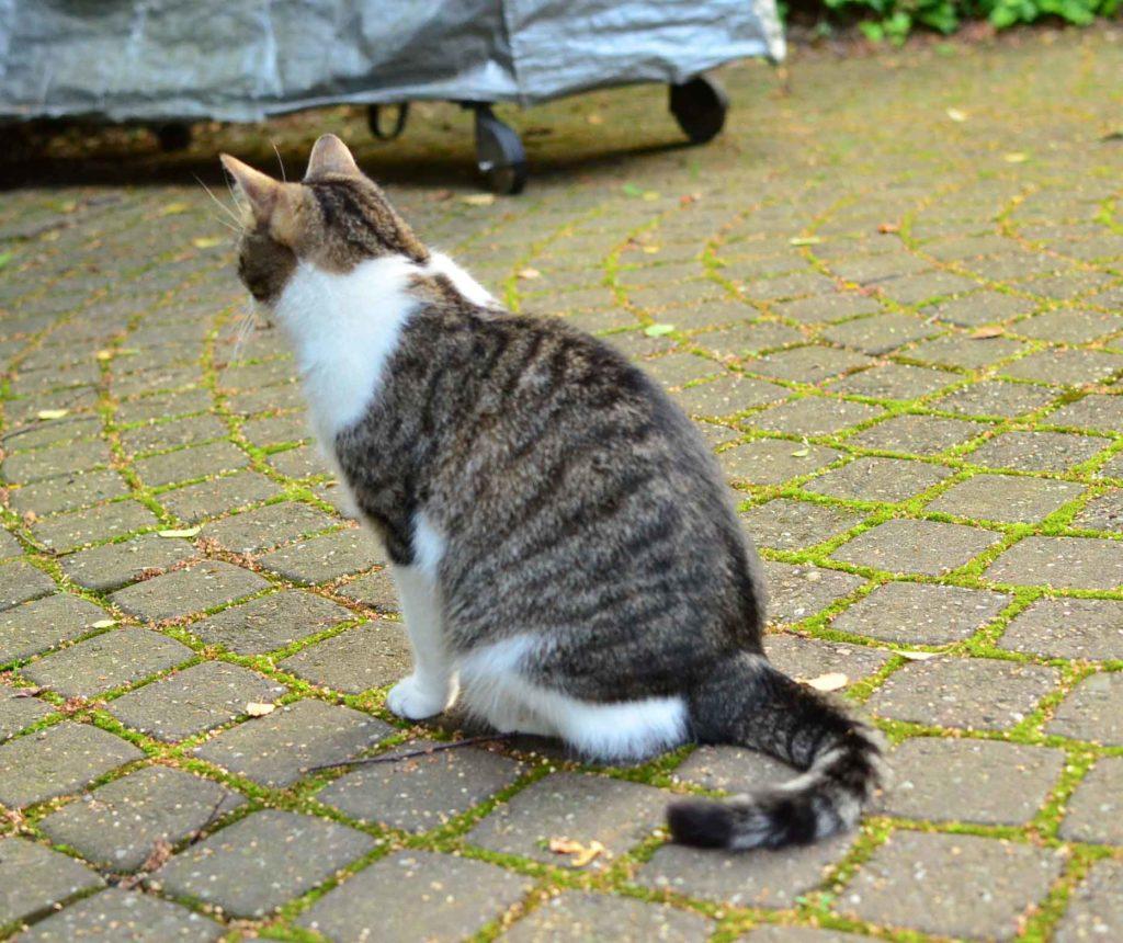 roetsch-Katze-sitzend-im-Garten